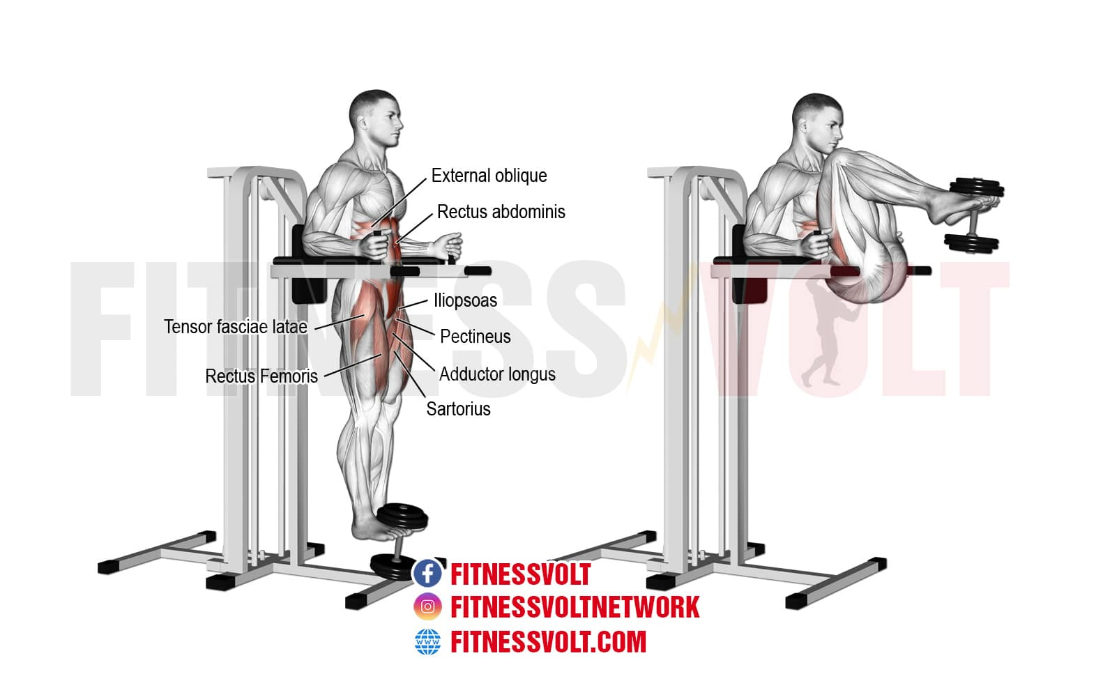 Weighted Captain's Chair Leg and Hip Raise (Abdominals ...