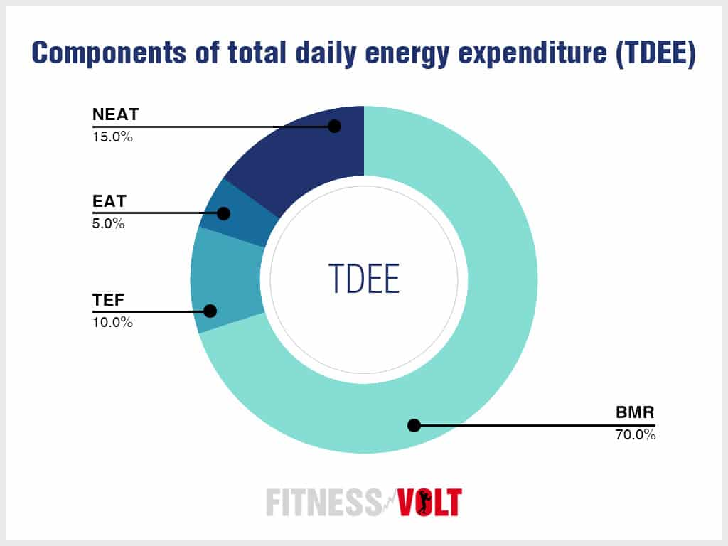 Components of total daily energy expenditure
