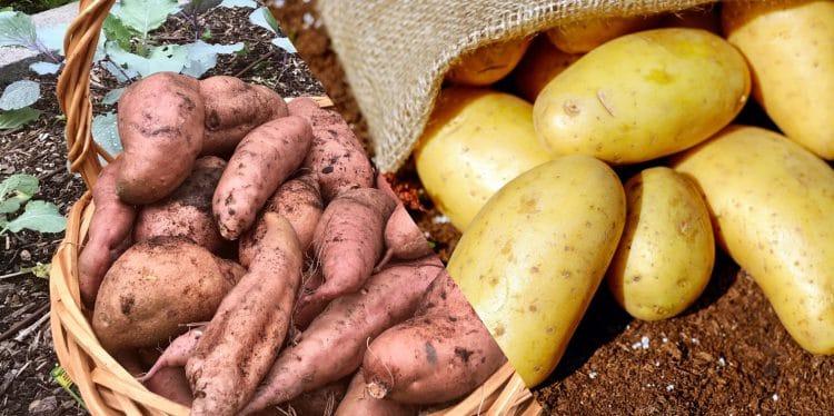 White Potato vs. Sweet Potato Nutrition