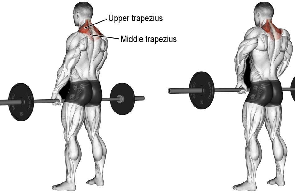 Barbell Shrug Exercise
