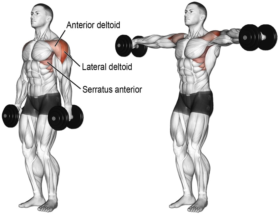 Dumbbell Lateral Raise Exercise