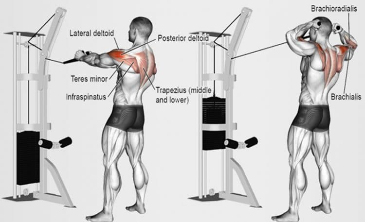 Cable face pulls