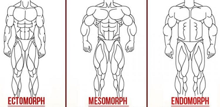 Ectomorph, Endomorph or Mesomorph