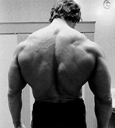The Massive Back Of Arnold Schwarzenegger