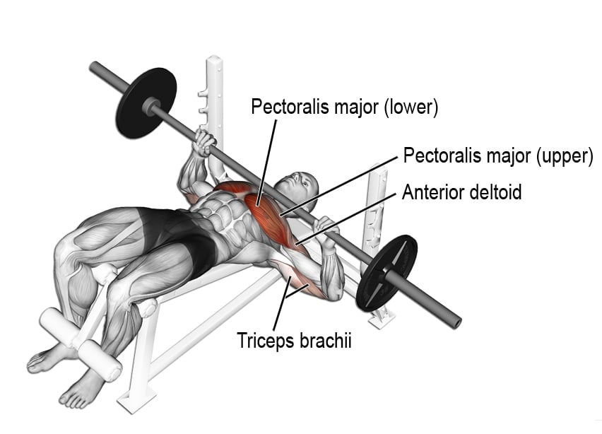 Decline Barbell Bench Pres
