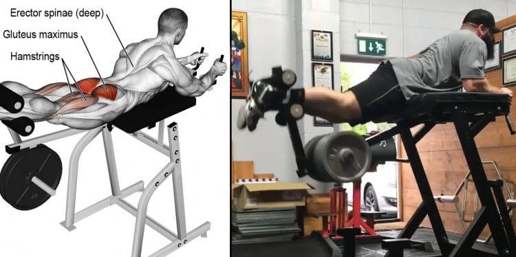 Reverse Hyperextension Guide