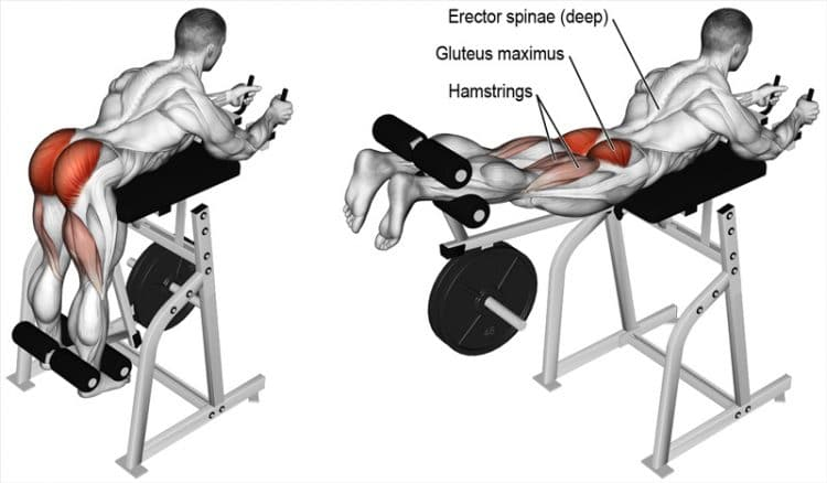 Reverse Hyperextension Muscles Worked