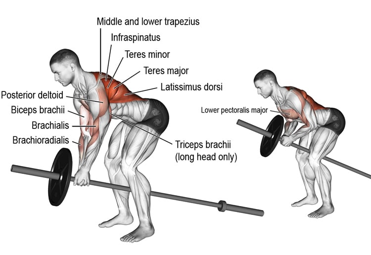 Barbell T Bar Rows
