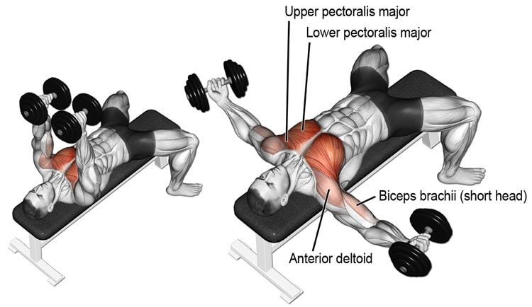 Dumbbell Flyes Exercise