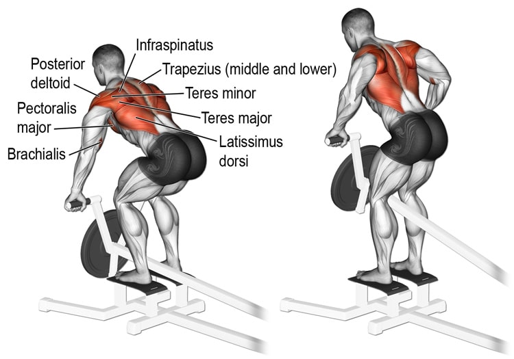 Muscles Worked During T-Bar Rows