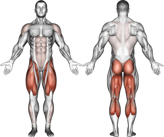Muscles Worked In Kettlebell Deadlifts