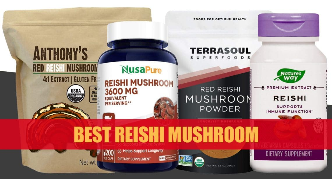 Best Reishi Mushroom