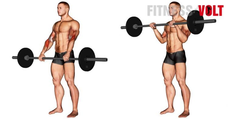 How To Barbell Reverse Curl