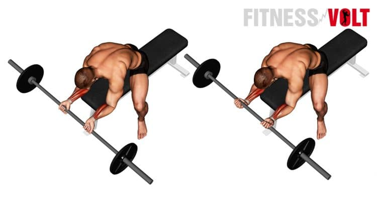Barbell Wrist Curl For Forearms