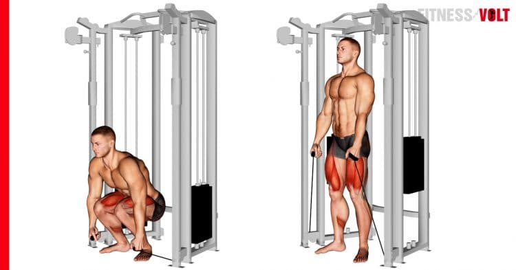 Cable Deadlift Exercise