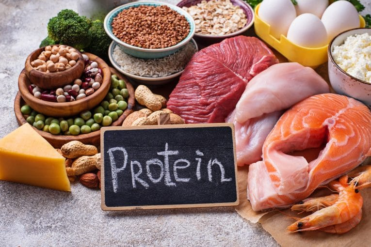 Animal and Plant Protein