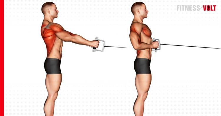 Cable Standing Row Back Exercise
