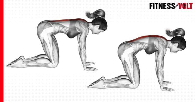Cat Stretch Exercises