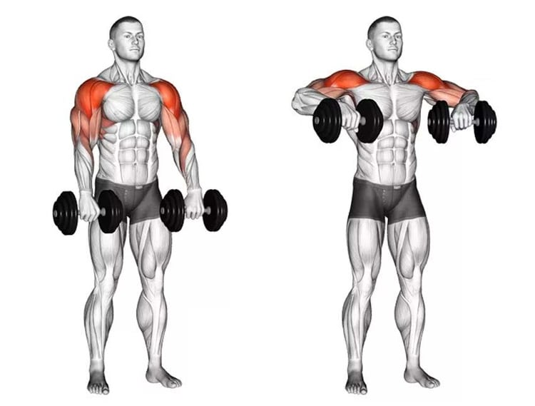 Dumbbell Upright Rows