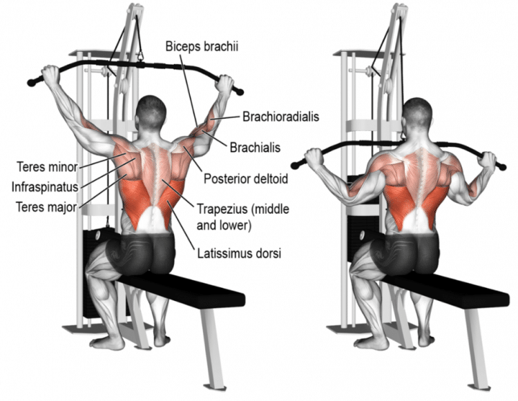 Lat Pulldowns Muscles