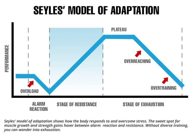 Selye's theory of adaptation