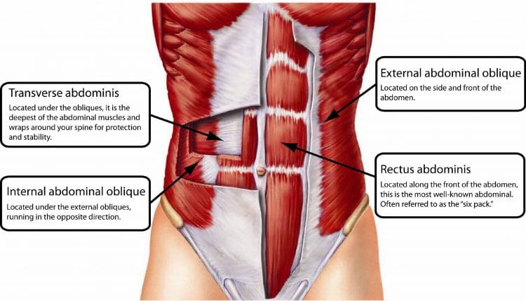Abs And The Core Muscles