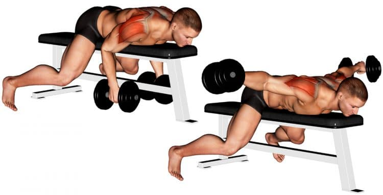Dumbbell Lying Rear Lateral Raise Exercise