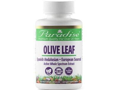 Paradise Olive Leaf