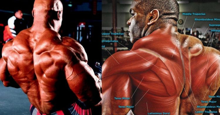 Best Lower Trap Exercises