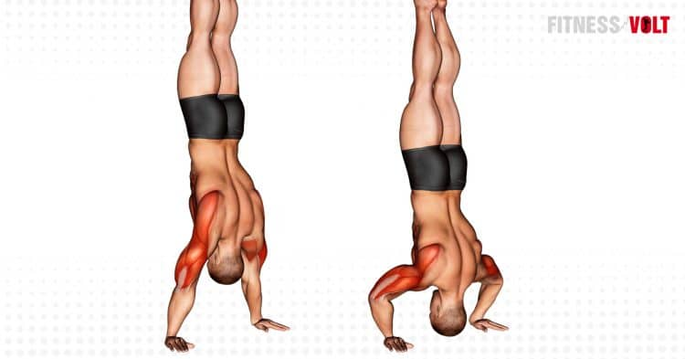 Handstand Push Up Exercise