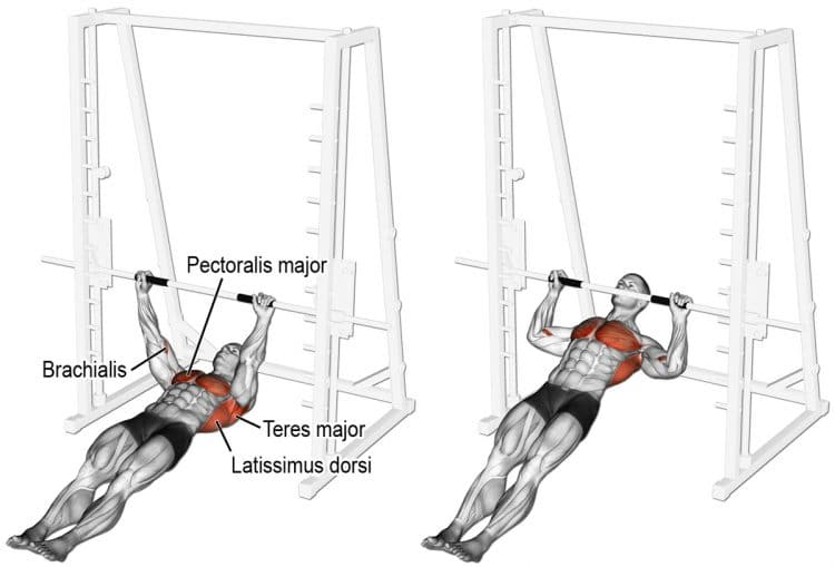 Horizontal Row Muscles Worked