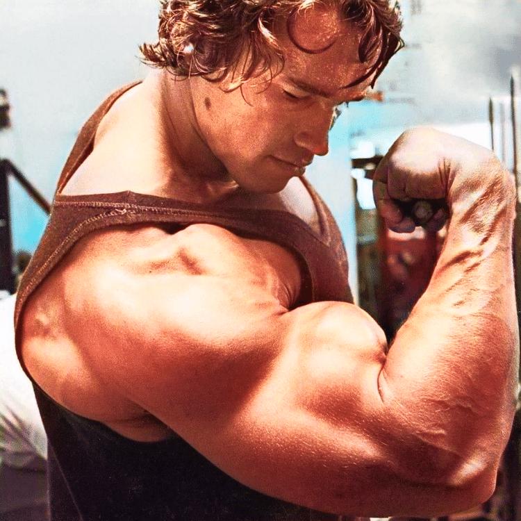 Arnold Schwarzenegger Bicep
