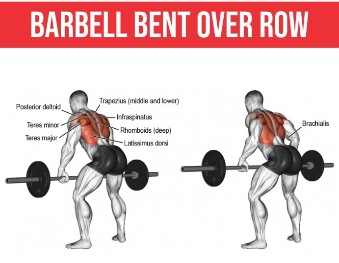 Barbell Bent Over Row Muscles Worked
