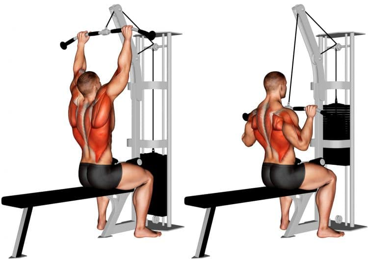 Cable Pulldown Back