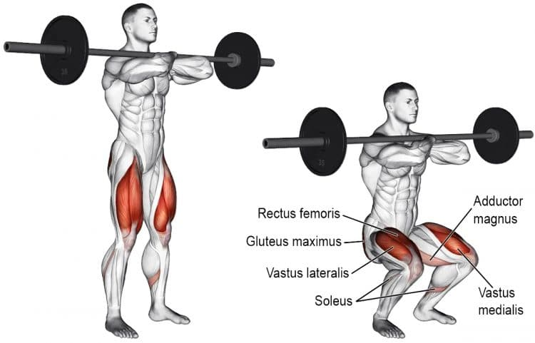 Front Squat Muscles Worked