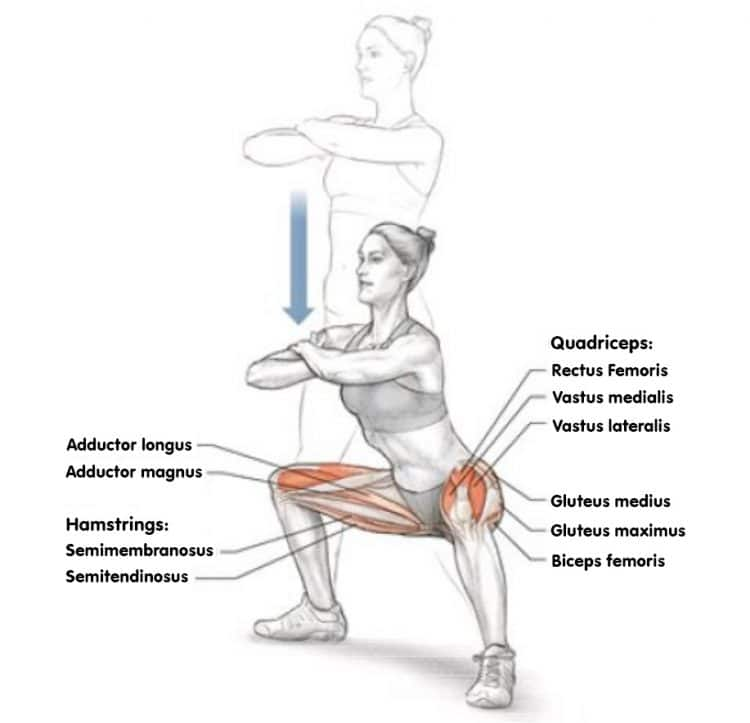 Wide Squat Stance Muscles Worked