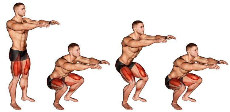 Squat Pulses Muscles Worked